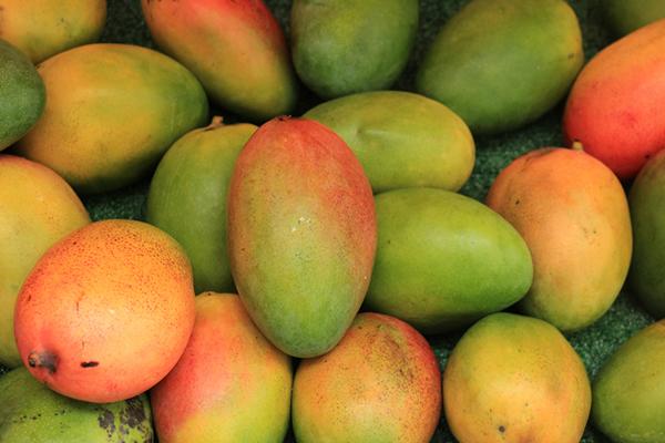 Colores en el mango