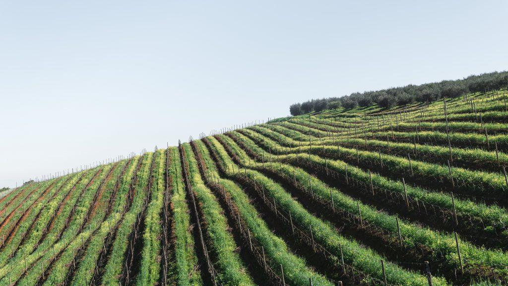 vinos-priorato